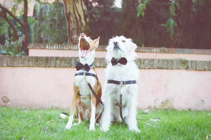 Preboda Ainhoa y Arturo_13